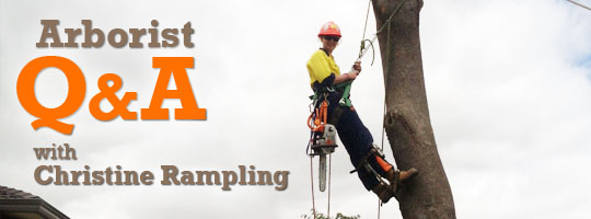 Arborist Q and A with Aussie Christine Rampling