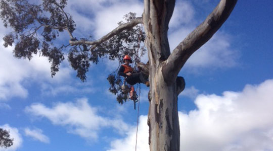 Christine Rampling in a harness in a tree at work.